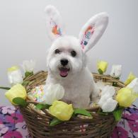 Pet Grooming Photos Richlene Kennels Pet Boarding And