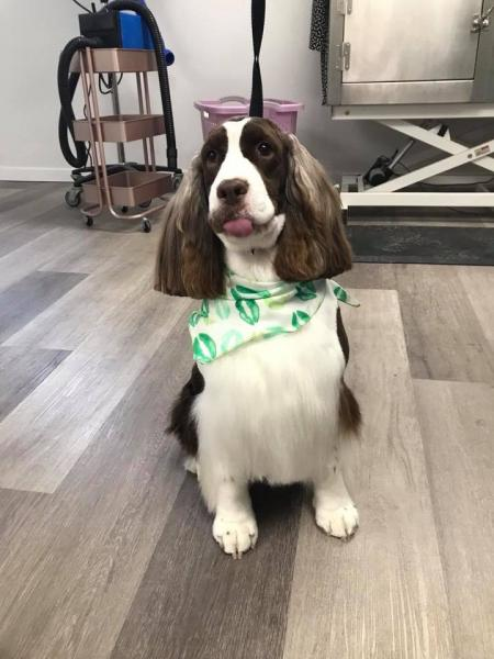 Leave it to our groomers to beautifully style and trim your pup's coat!