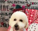 After a cute cut, we gave this adorable furball a Valentine's Day photo session!