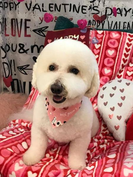 [Image: After a cute cut, we gave this adorable furball a Valentine's Day photo session! ]